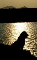 Das Profilbild von littleblackmone